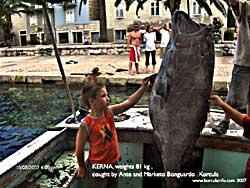 kernja dusky grouper 81 kg