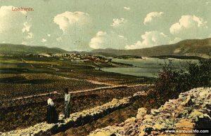 Vineyards of Lumbarda in 1917