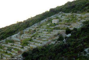 Dry Stone Walls on Zaglav