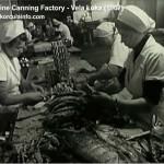 Video: 'Jadranka' - Sardine Canning Factory - Vela Luka in 1960s