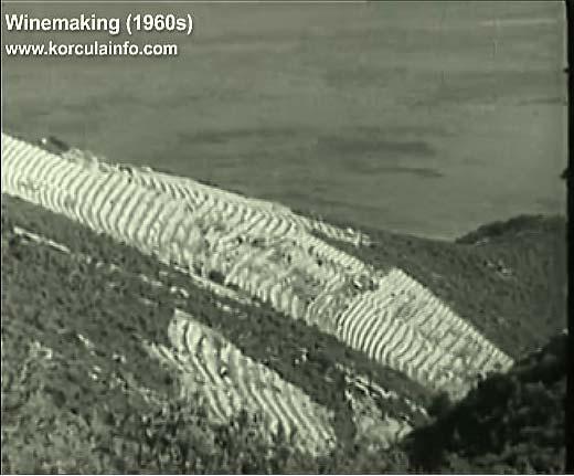 winemaking-korcula1960a