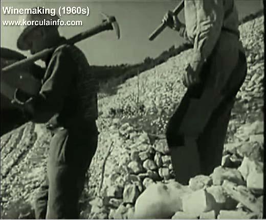 winemaking-korcula1960e