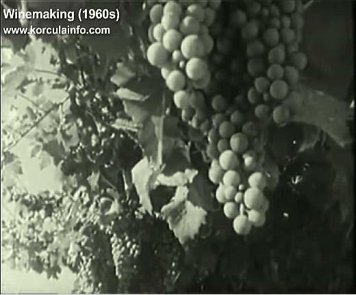 winemaking-korcula1960p