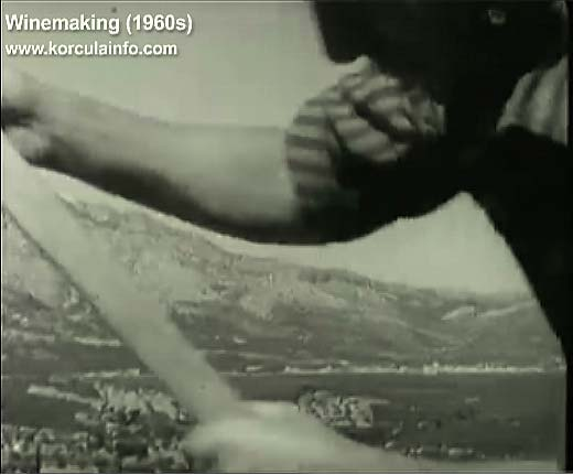 winemaking-korcula1960v