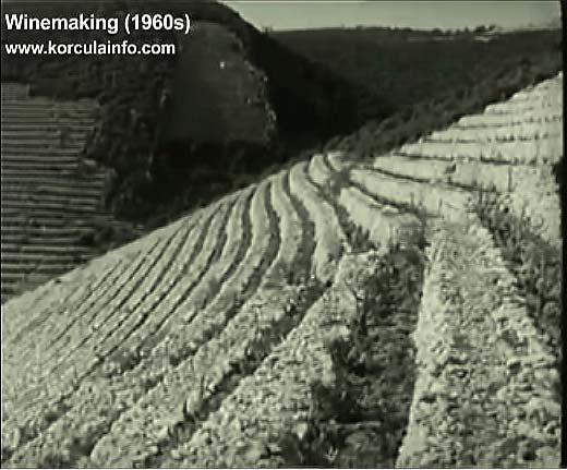 winemaking-korcula1960x