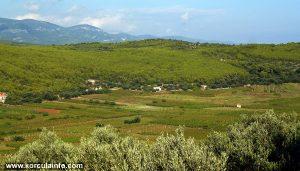 Prapatna Vineyard Panorama - Smokvica