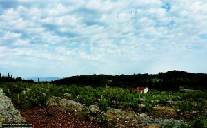 Vineyard Defora