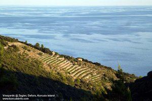 Vineyards @ Zaglav, Korcula island