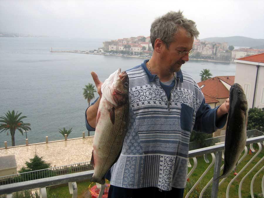 Fish Lubin, Dicentrarchus labrax, brancin, smudut - European seabass
