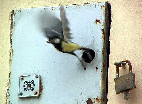 bird-nest3