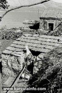 Goat House in Lumbarda (1938)
