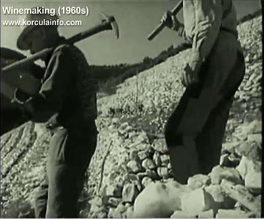 winemaking-korcula1960e