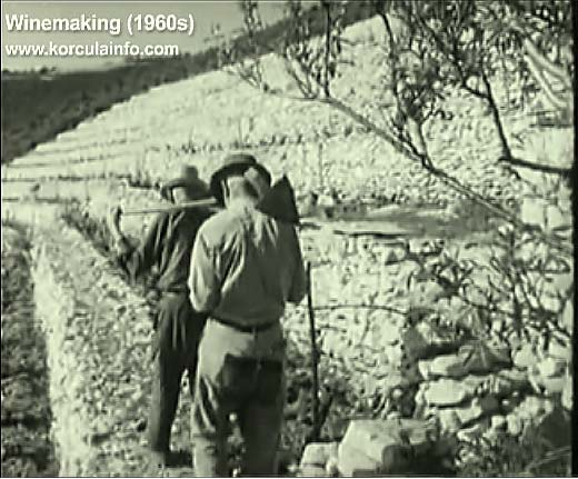 winemaking-korcula1960f