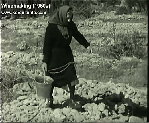 winemaking-korcula1960u