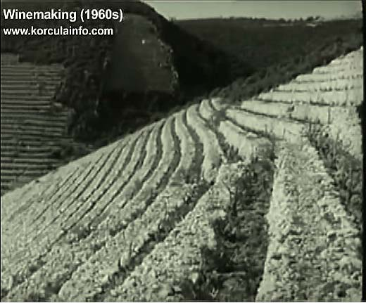 winemaking-korcula1960x