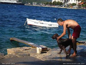 Dog after swim on Korcula beach