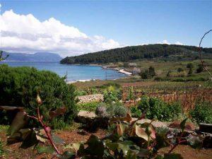 Views over vineyards and Bilin Zal