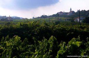Lumbarda Vineyard - Grk Wine