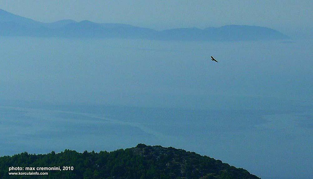 raptor-korcula-island1