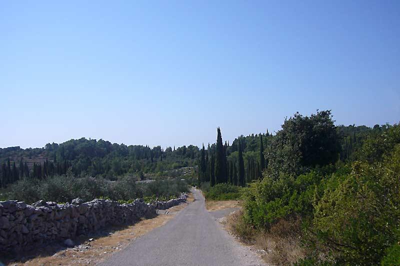 Cypress trees nr Zrnovo