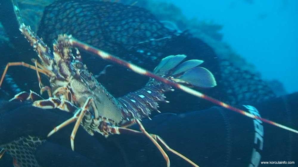 scuba-diving-korcula2