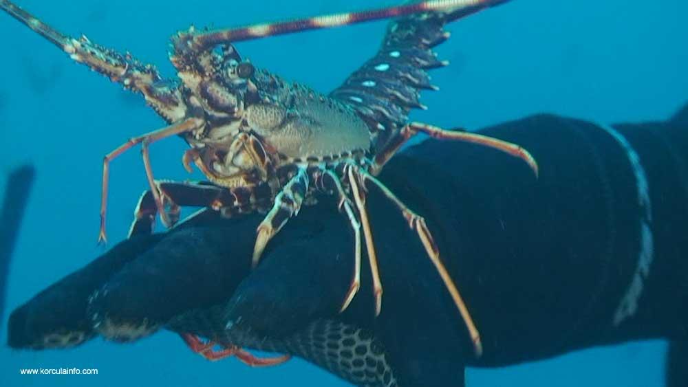 scuba-diving-korcula3