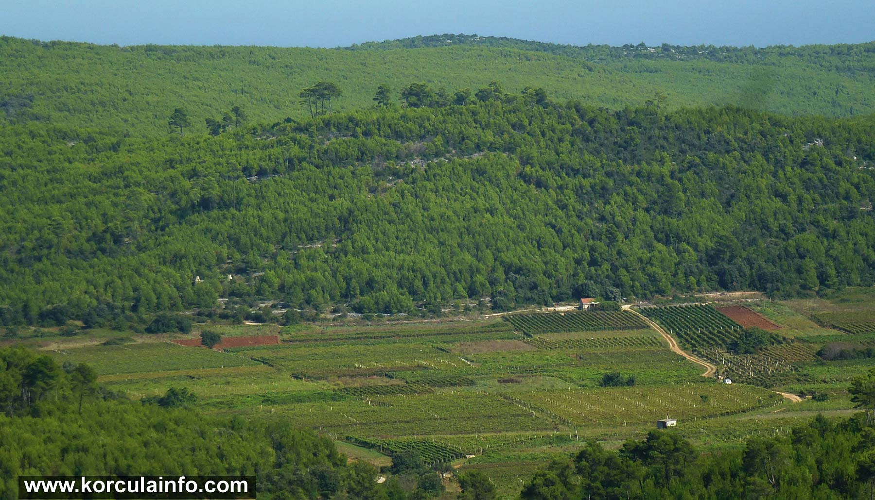 Krusevo Vineyard - Smokvica Field
