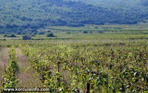 Prapatna Vineyard in Smokvica