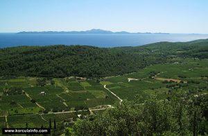 Vineyards in Cara