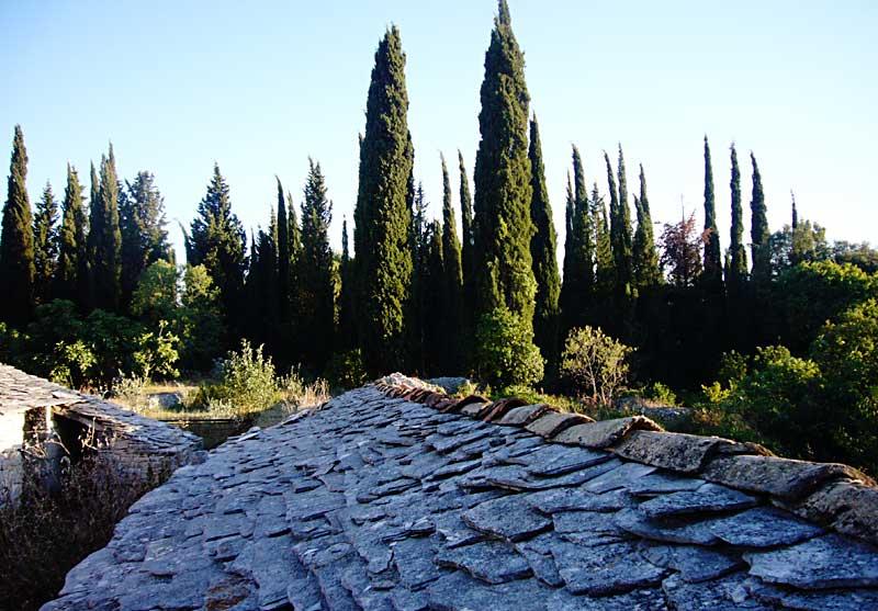 Cypress trees in Prvo Selo, Zrnovo
