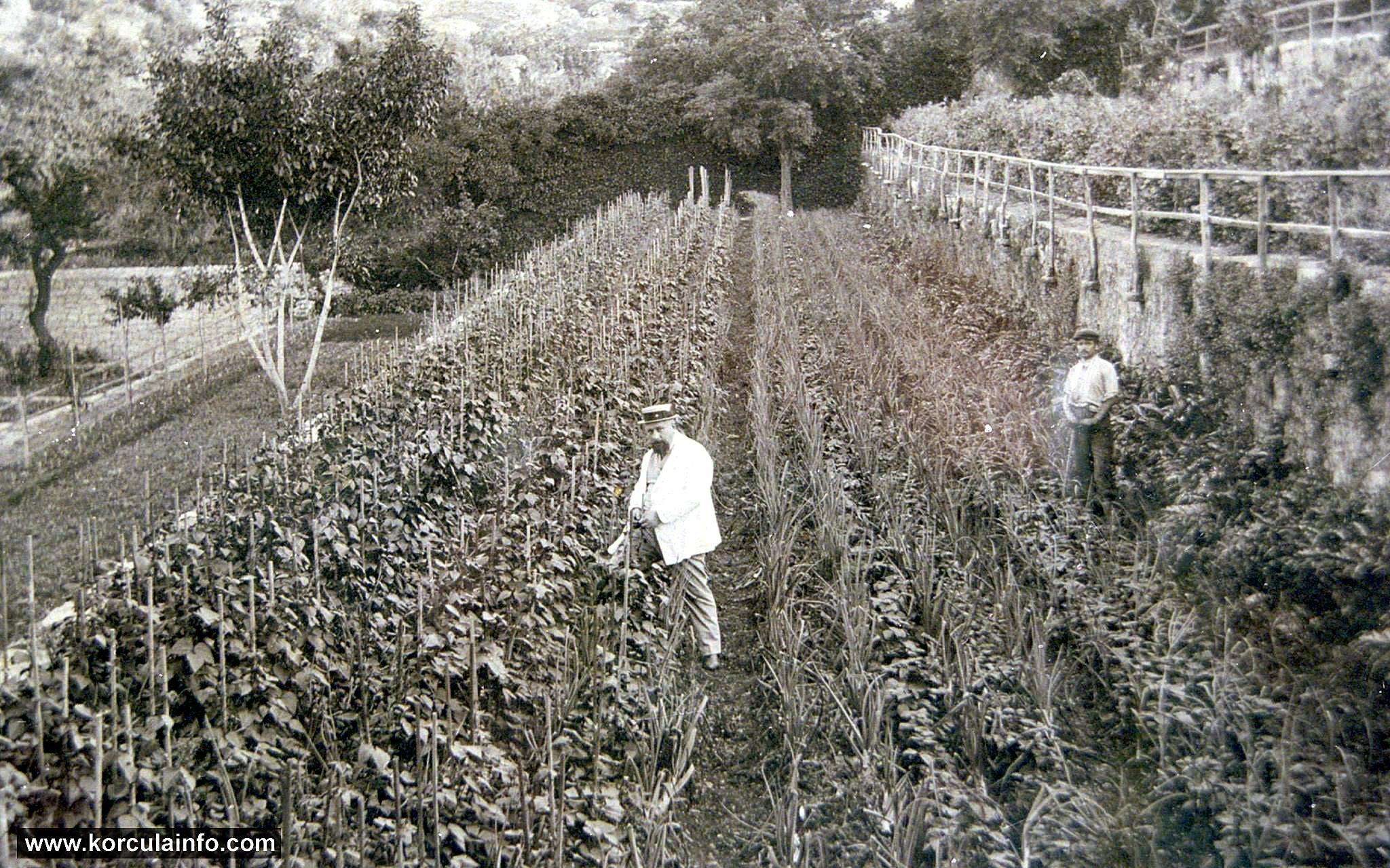 Gardens Foretic in Korcula (1920s)