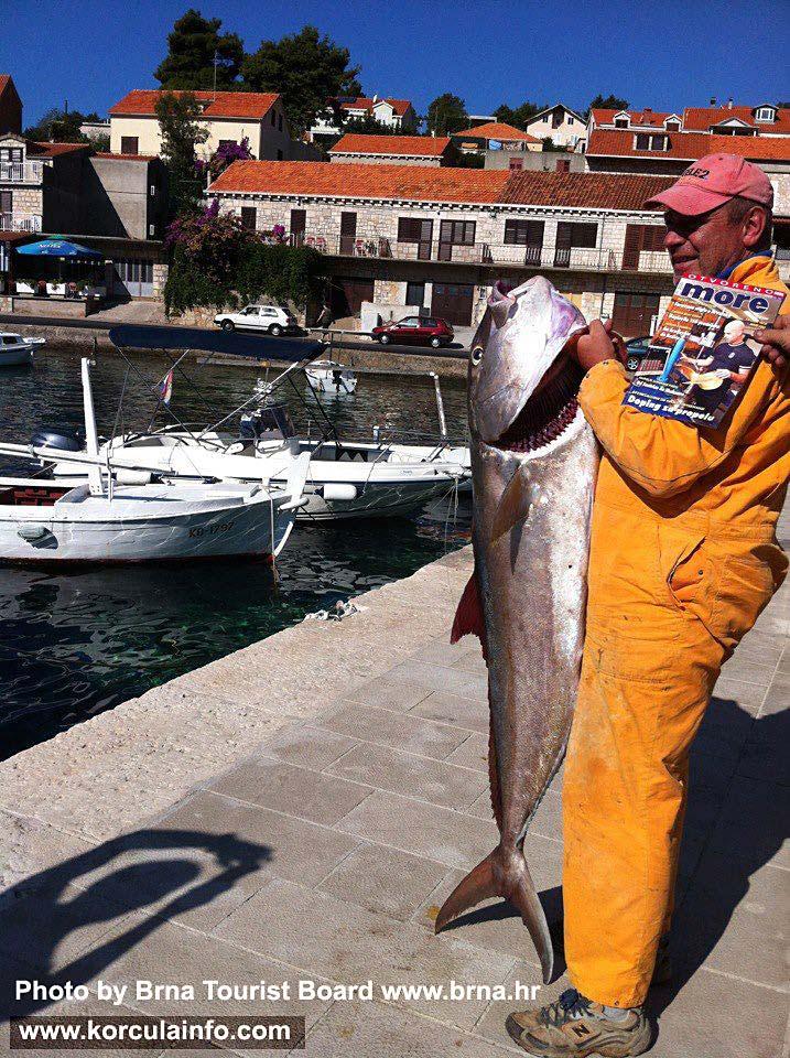 Large Fish caught in Brna Oct 2012