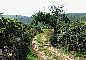 cycling-smokvica-tarmac-road1