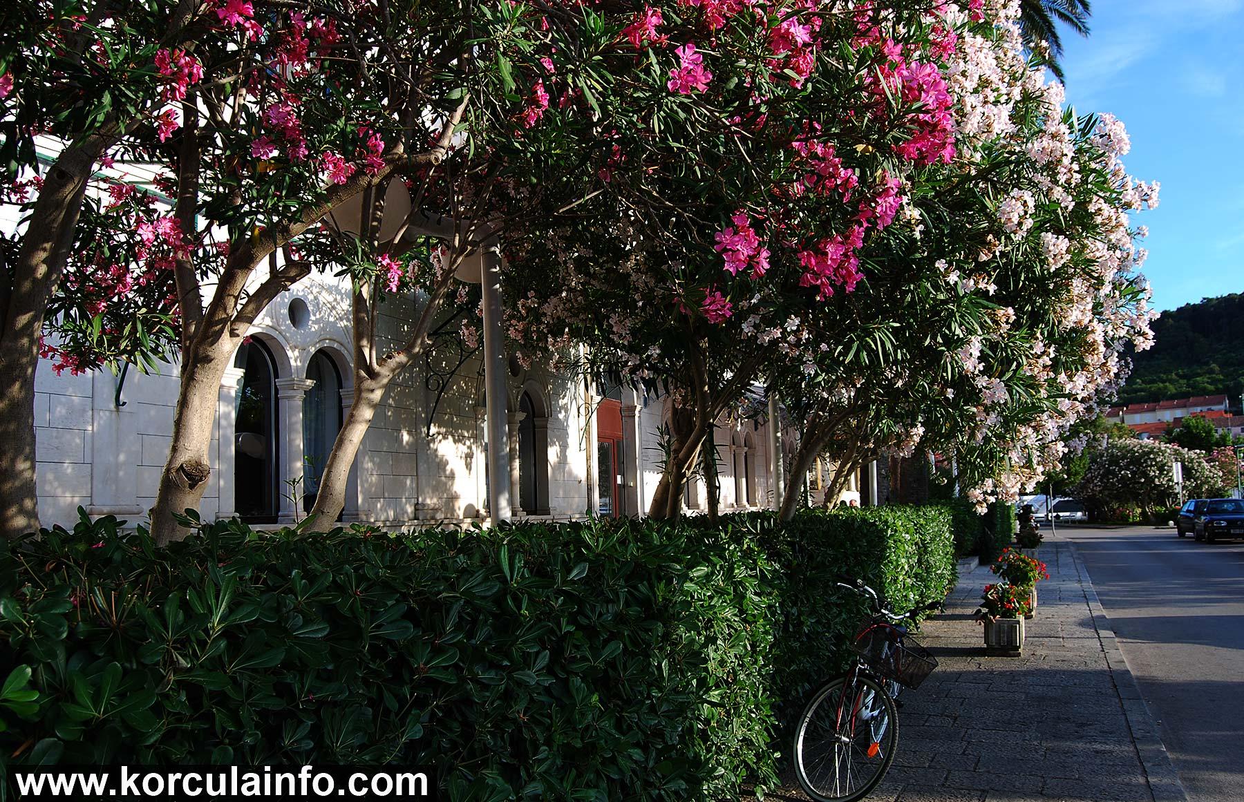 Passing by Hotel Korcula De La Ville