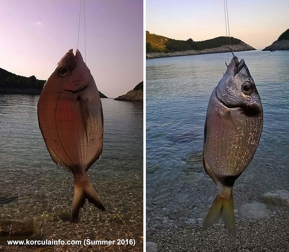 I caught more fish (2016)
