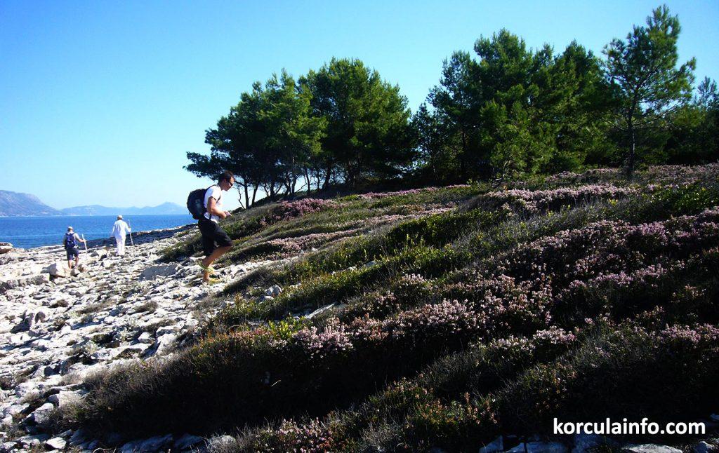 Landscape and vegetation